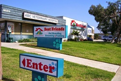 Best Friends Pet Care, dog daycare in San Diego, pet boarding San Diego, San Diego pet resort