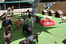 Camp Run-A-Mutt Mission Hills, dog daycare in San Diego, pet boarding San Diego, San Diego pet resort