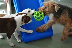 Dog Days San Diego, dog daycare in San Diego, pet boarding San Diego, San Diego pet resort