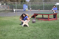 Markim Pet Resort, dog daycare in San Diego, pet boarding San Diego, San Diego pet resort