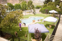 Snug Pet Resort, dog daycare in San Diego, pet boarding San Diego, San Diego pet resort