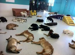 dog daycare in San Diego, pet boarding San Diego, San Diego pet resort